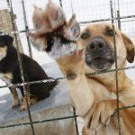 Les animaux abandonnés et maltraités ont besoin de votre aide