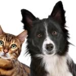 Reprise des activités des refuges pour animaux